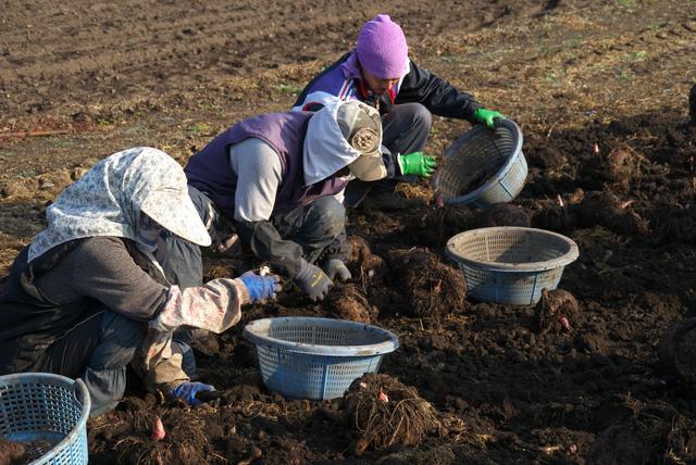 【コラム】 農業イノベーションで会計人にも商機